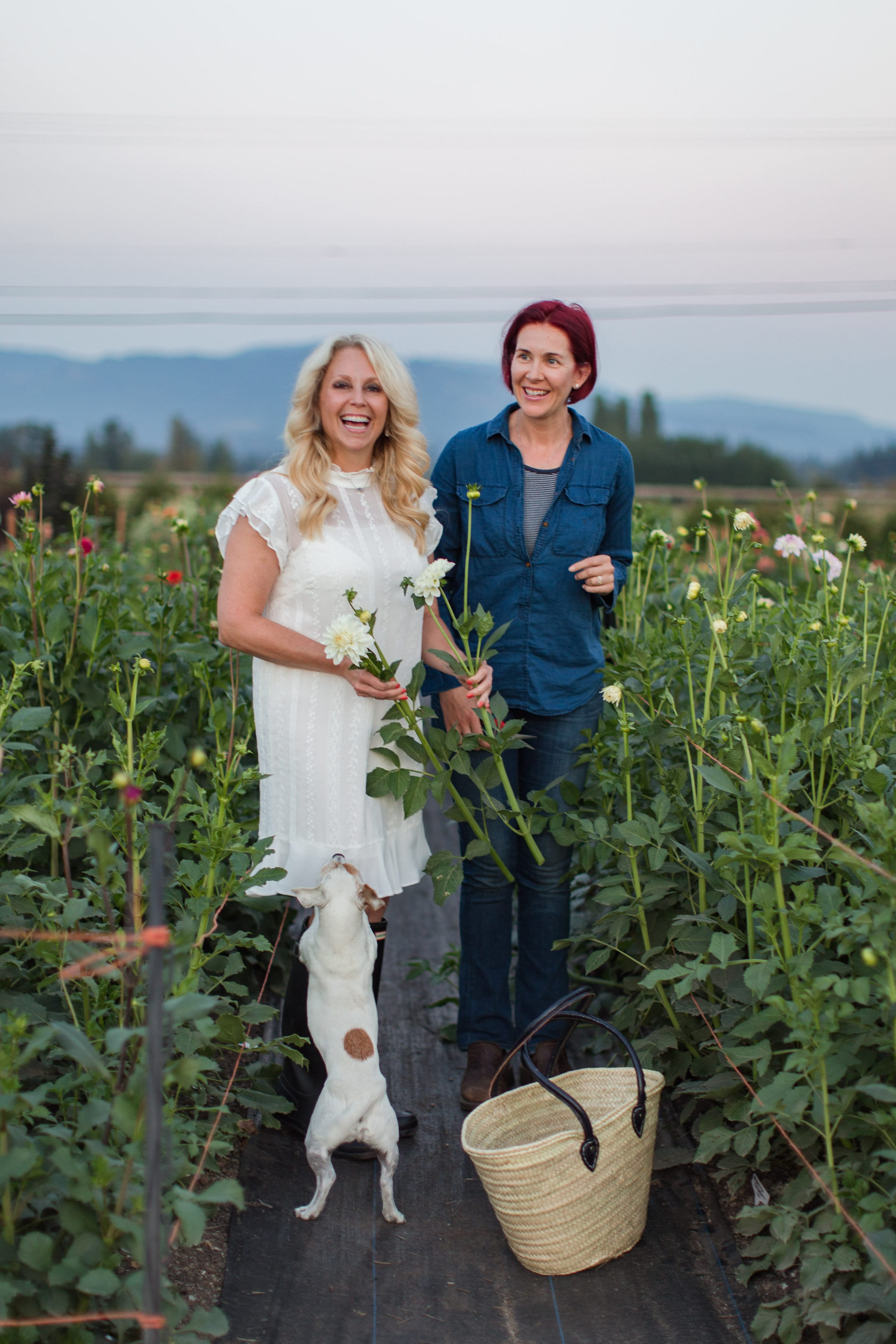 Cutting flowers with Amy Brown at Laughing Goat Flower Farm
