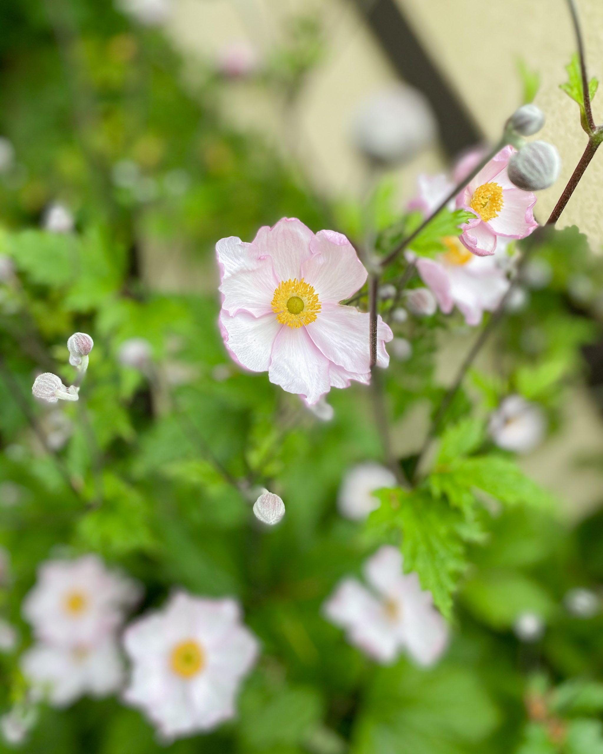 white yellow flowers